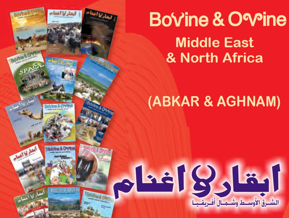 Bovine and Ovine for the Middle East and North Africa
